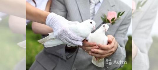 Свадебные голуби: зачем выпускают голубей на свадьбе?