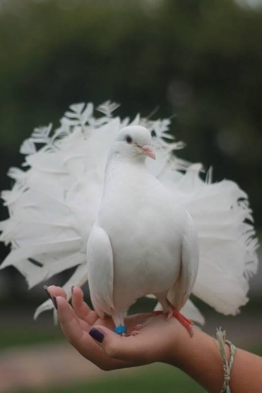 Запуск голубей на свадьбу -  свадебное шоу