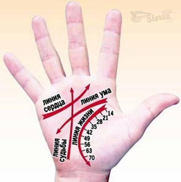 Судьбоносное значение линии брака на руке
