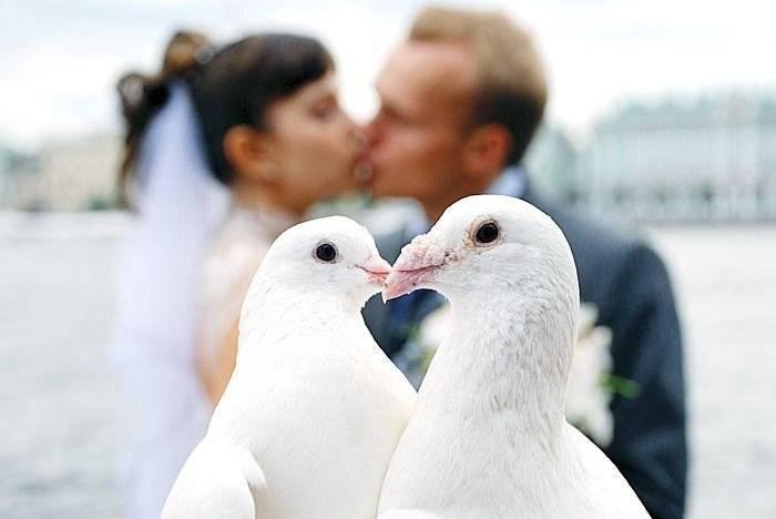 Традиция и приметы выпускания голубей на свадьбе