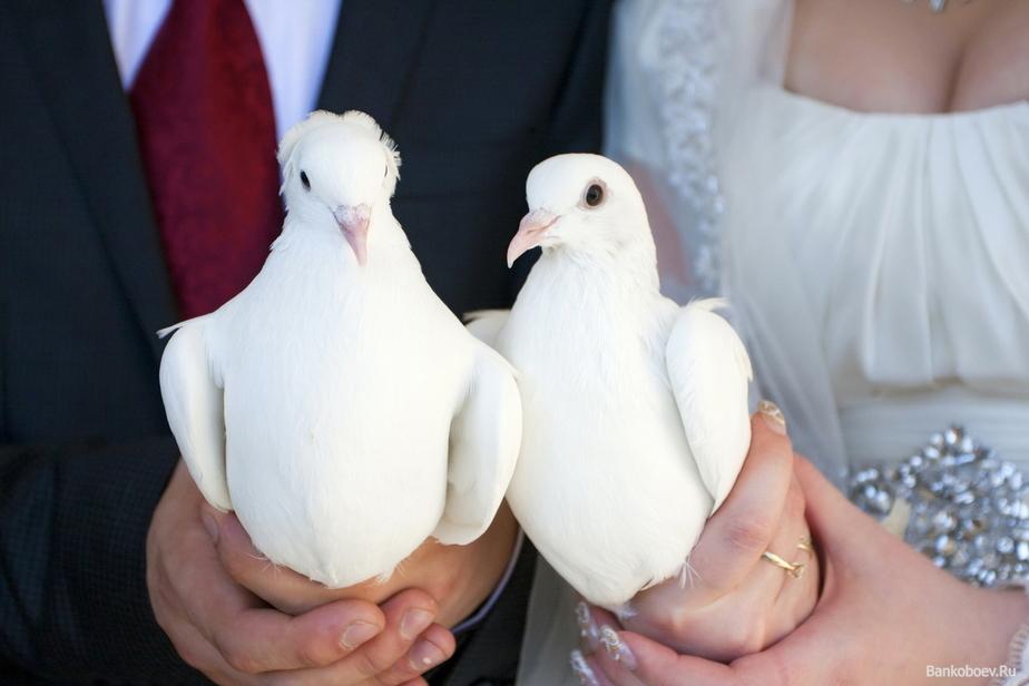 Выпускание голубей на свадьбе: красивое действо или древняя традиция