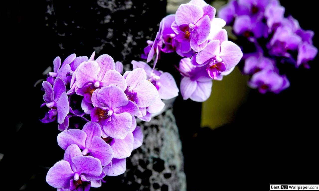 Где можно разместить орхидеи в интерьере