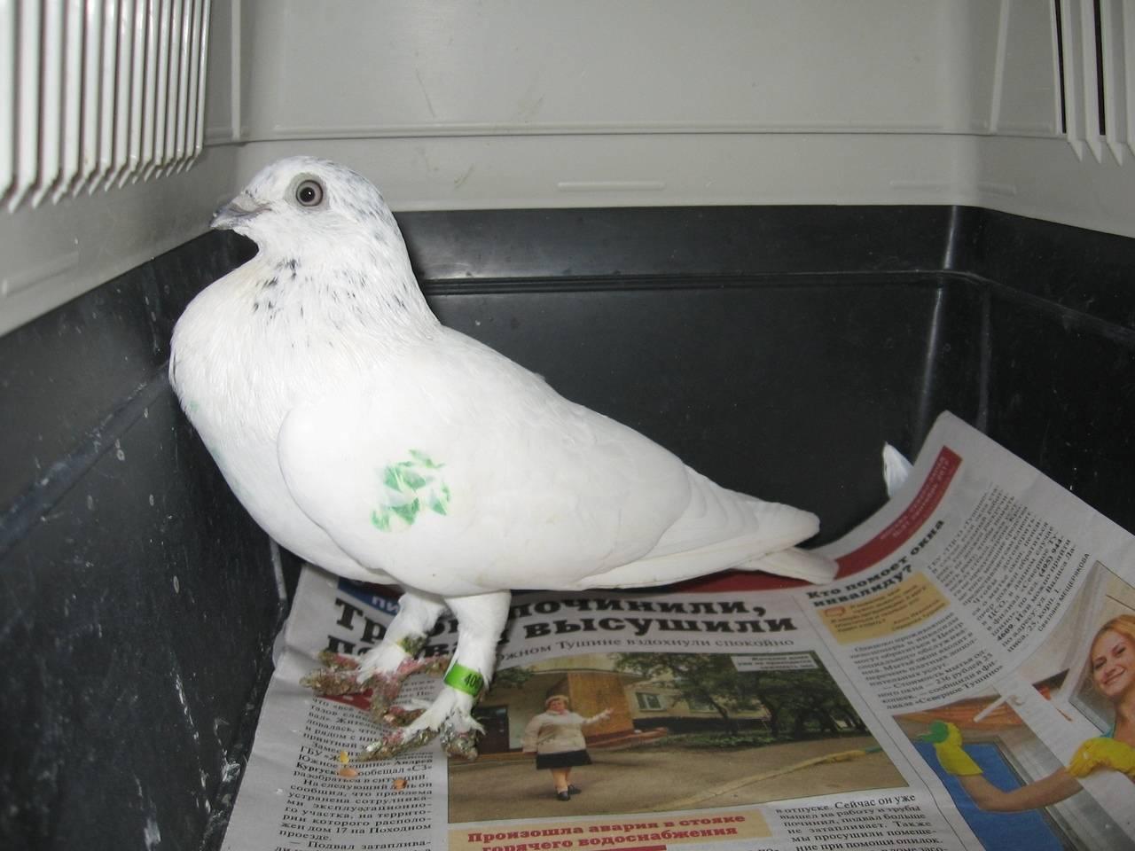 Белые голуби на свадьбу: как выпускать, что означает этот символ и традиция