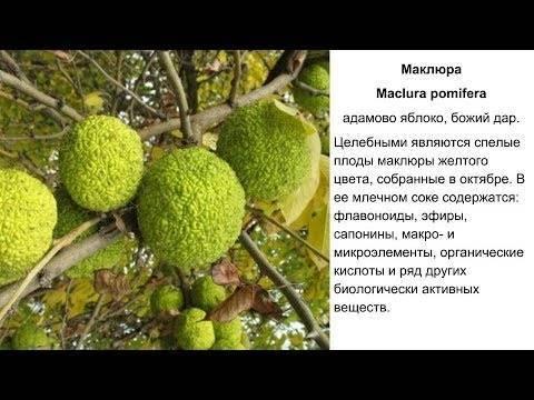 """Ооо""""адамово яблоко"""", г санкт-петербург, инн 7826161068, огрн 1027810343439 окпо 34379117 - реквизиты, отзывы, контакты, рейтинг."""