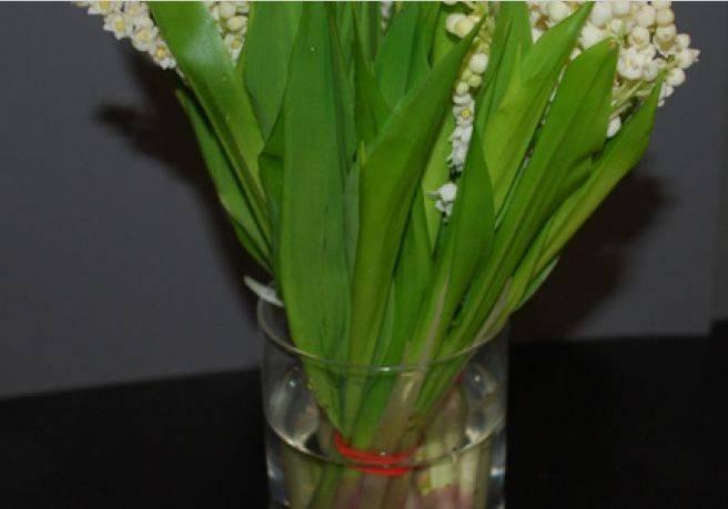 Букет невесты из живых цветов своими руками